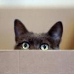 Como hacer que el gato no arañe el sofá